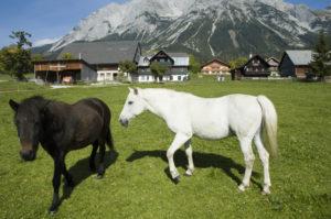 Pferde am Rupbauerhof in Ramsau am Dachstein